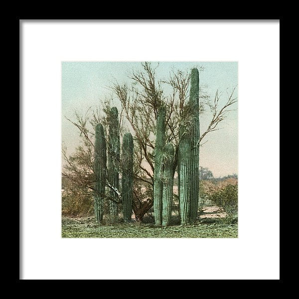 Vintage Arizona Cactus Postcard (Square) - Framed Print from Wallasso - The Wall Art Superstore
