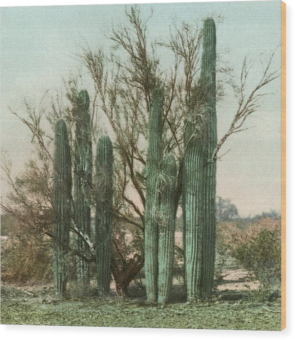 Vintage Arizona Cactus Postcard (Square) - Wood Print from Wallasso - The Wall Art Superstore
