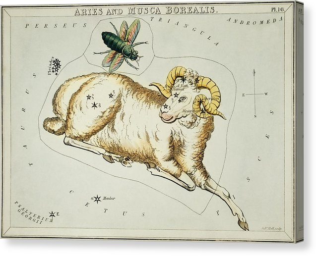 Vintage Astronomy Chart of Aries and Musca Borealis Constellation - Canvas Print from Wallasso - The Wall Art Superstore