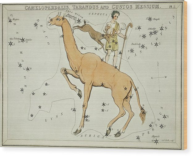 Vintage Astronomy Chart of Camelopardalis, Tarandus and The Custos Messium Constellation - Wood Print from Wallasso - The Wall Art Superstore