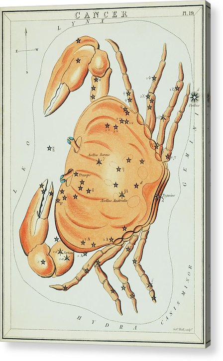 Vintage Astronomy Chart of Cancer Constellation - Acrylic Print from Wallasso - The Wall Art Superstore