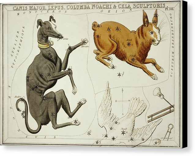 Vintage Astronomy Chart of Canis Major, Lepus, Columba Noachi and The Cela Sculptoris Constellation - Canvas Print from Wallasso - The Wall Art Superstore