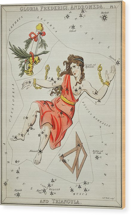 Vintage Astronomy Chart of Gloria Frederici, andromeda Constellation - Wood Print from Wallasso - The Wall Art Superstore