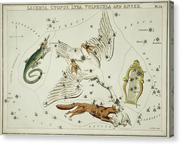 Vintage Astronomy Chart of Lacerta, Cygnus, Lyra, Vulpecula and The Anser Constellations - Canvas Print from Wallasso - The Wall Art Superstore