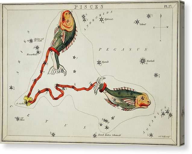 Vintage Astronomy Chart of Pisces Constellation - Canvas Print from Wallasso - The Wall Art Superstore