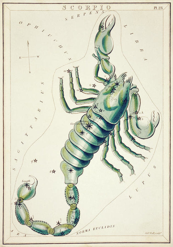 Vintage Astronomy Chart of Scorpio Constellation - Art Print from Wallasso - The Wall Art Superstore