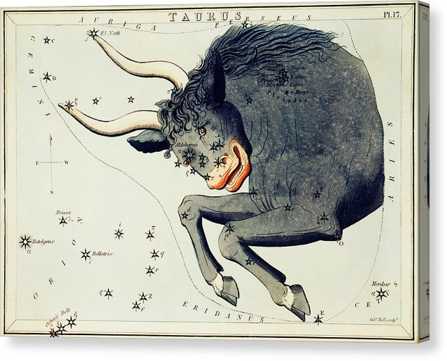 Vintage Astronomy Chart of Taurus Constellation - Canvas Print from Wallasso - The Wall Art Superstore