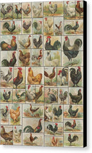Vintage Chicken and Rooster Illustration Collage - Canvas Print from Wallasso - The Wall Art Superstore