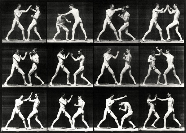 Vintage Film Study of Boxers Fighting - Art Print from Wallasso - The Wall Art Superstore