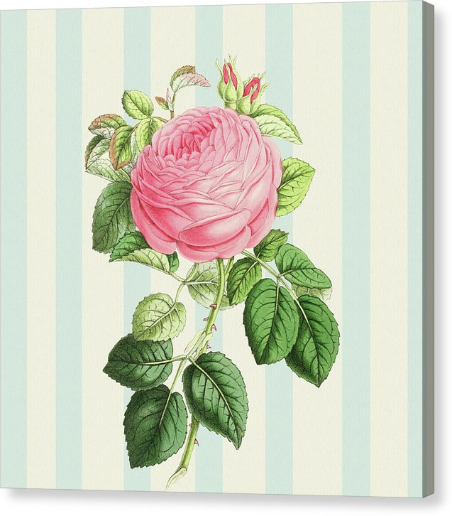 Vintage Rose Decoupage Design - Canvas Print from Wallasso - The Wall Art Superstore