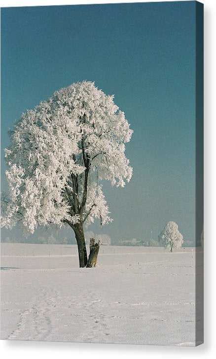 Vintage Tree Covered In Snow - Canvas Print from Wallasso - The Wall Art Superstore