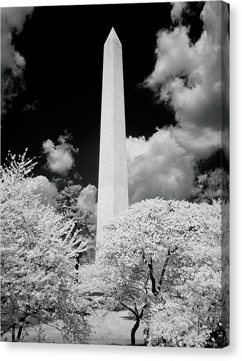 Washington Monument, Washington D.C. - Canvas Print from Wallasso - The Wall Art Superstore