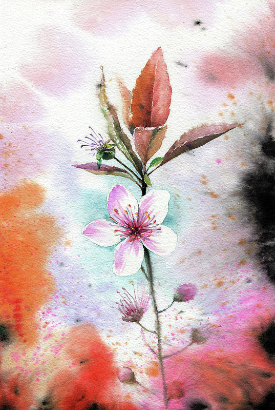 Watercolor Cherry Blossom Painting - Art Print from Wallasso - The Wall Art Superstore