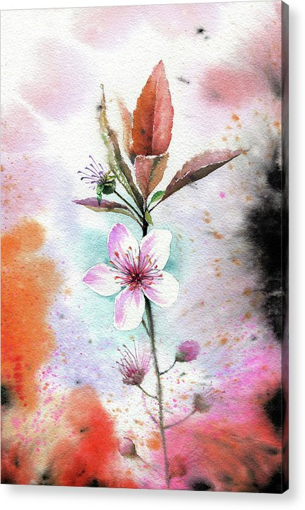 Watercolor Cherry Blossom Painting - Acrylic Print from Wallasso - The Wall Art Superstore