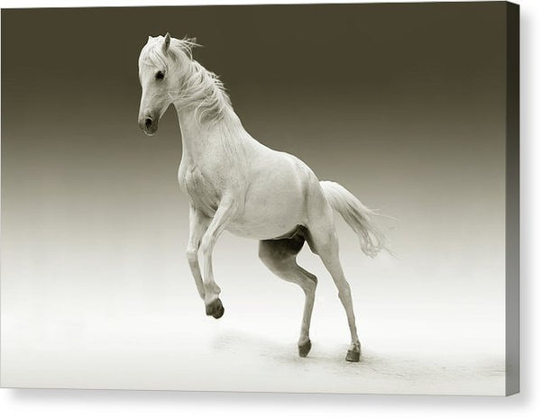 White Horse Jumping - Canvas Print from Wallasso - The Wall Art Superstore