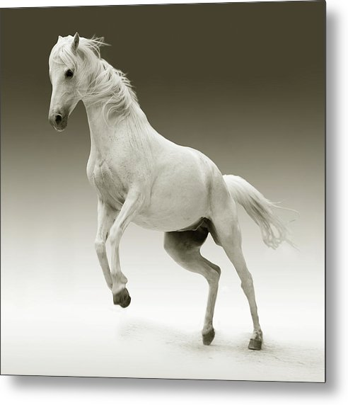 White Horse Jumping - Metal Print from Wallasso - The Wall Art Superstore