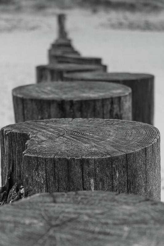 Wooden Posts On Sandy Beach - Art Print from Wallasso - The Wall Art Superstore
