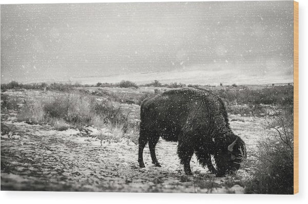 Young Buffalo Grazing In Snow, Sepia - Wood Print from Wallasso - The Wall Art Superstore