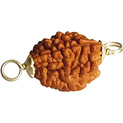 Silver capped ek mukhi rudraksha bead gold capping pure natural original shiva