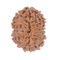 Original Indonesian 14 Mukhi / Fourteen Faced Rudraksha Beads