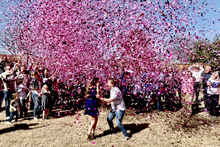 Load image into Gallery viewer, Gender Reveal Confetti Cannons