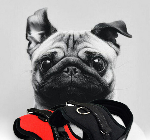 Dogizo durable harness