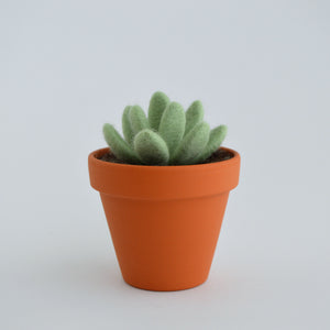 Medium Felt Succulent in Mint