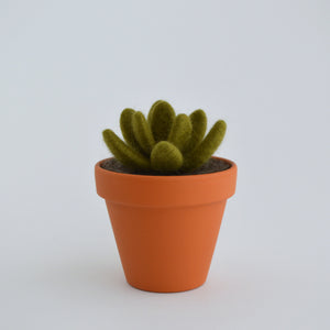 Medium Felt Succulent in Olive