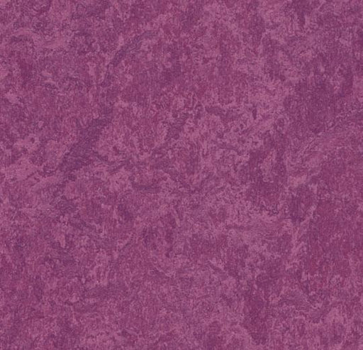 Marmoleum Click Cinch LOC Square - Summer Pudding 333245 B&R: Flooring & Carpeting Marmoleum