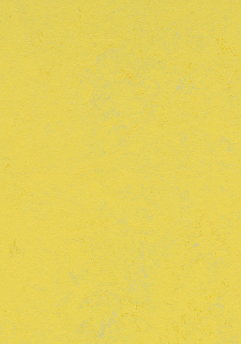 Marmoleum Decibel Sheet Concrete - Yellow Glow B&R: Flooring & Carpeting Forbo USA