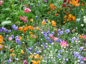Flower garden of annuals and perennials