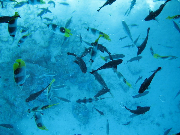 School of fish in water