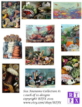 Load image into Gallery viewer, Sea Anemone Card Set - Collection #1