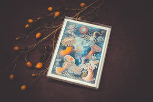 Sea Anemone Card Set - Collection #1