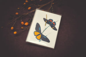 Butterfly Card Set - Collection #1