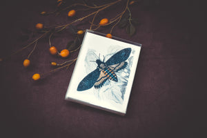 Death's Head Hawk Moth Card Set