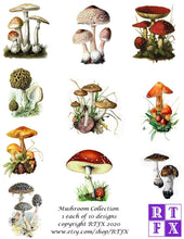 Load image into Gallery viewer, Mushroom Card Set - Collection #1
