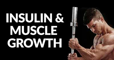 INSULIN-GLUCOSE-AND-MUSCLE-GROWTH