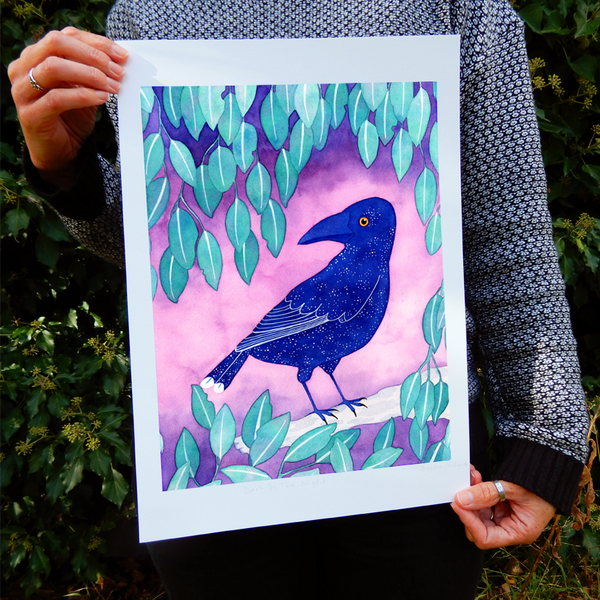 Currawong Bird Print
