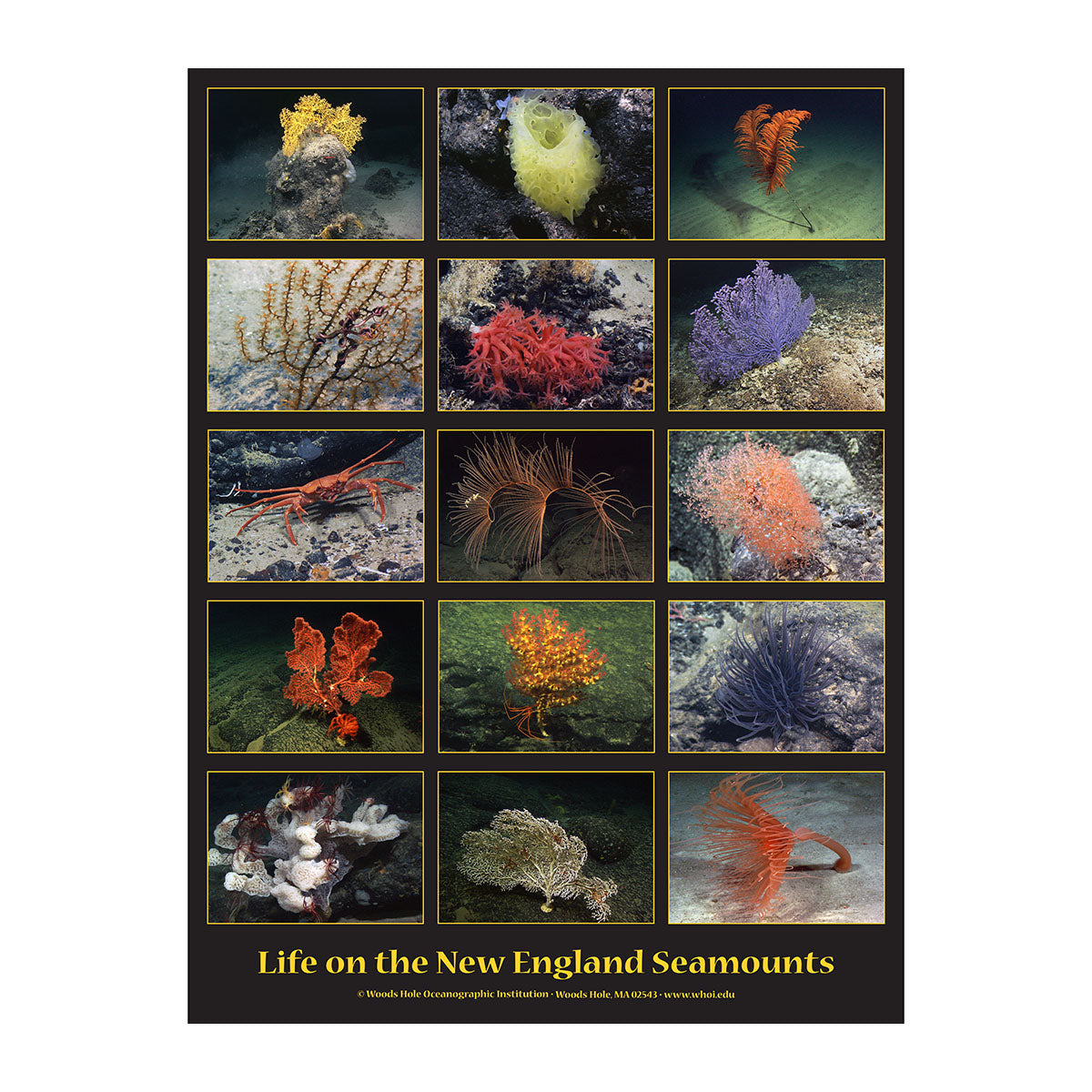 Life on the Seamounts Poster