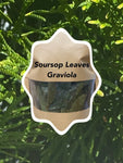 Soursop Leaves for Tea (Graviola)