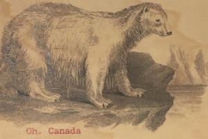 Postcard - Polar Bear