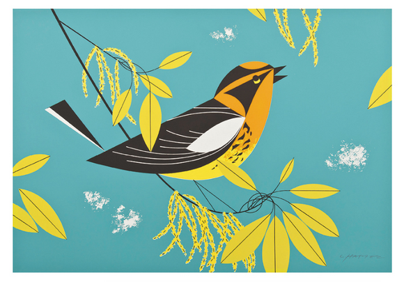 Charley Harper: Blackburnian Warbler Small Boxed Notecards