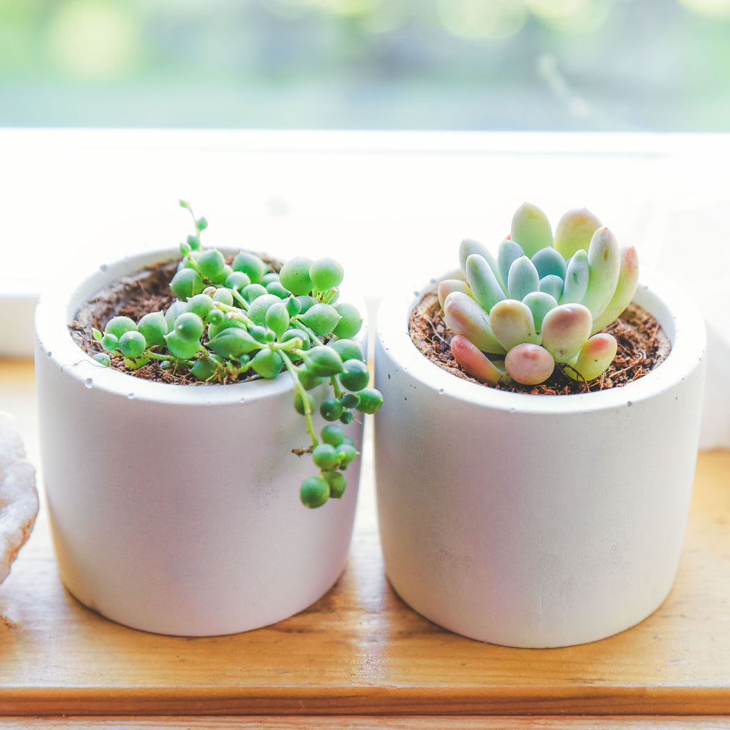 BACK IN STOCK!  CONCRETE POTS | WHITE
