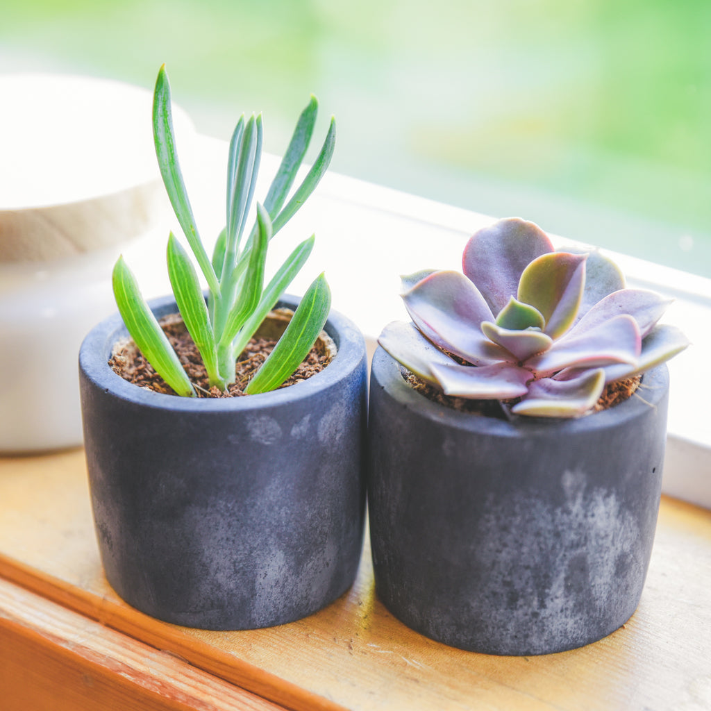 BACK IN STOCK!  CONCRETE POTS | BLACK