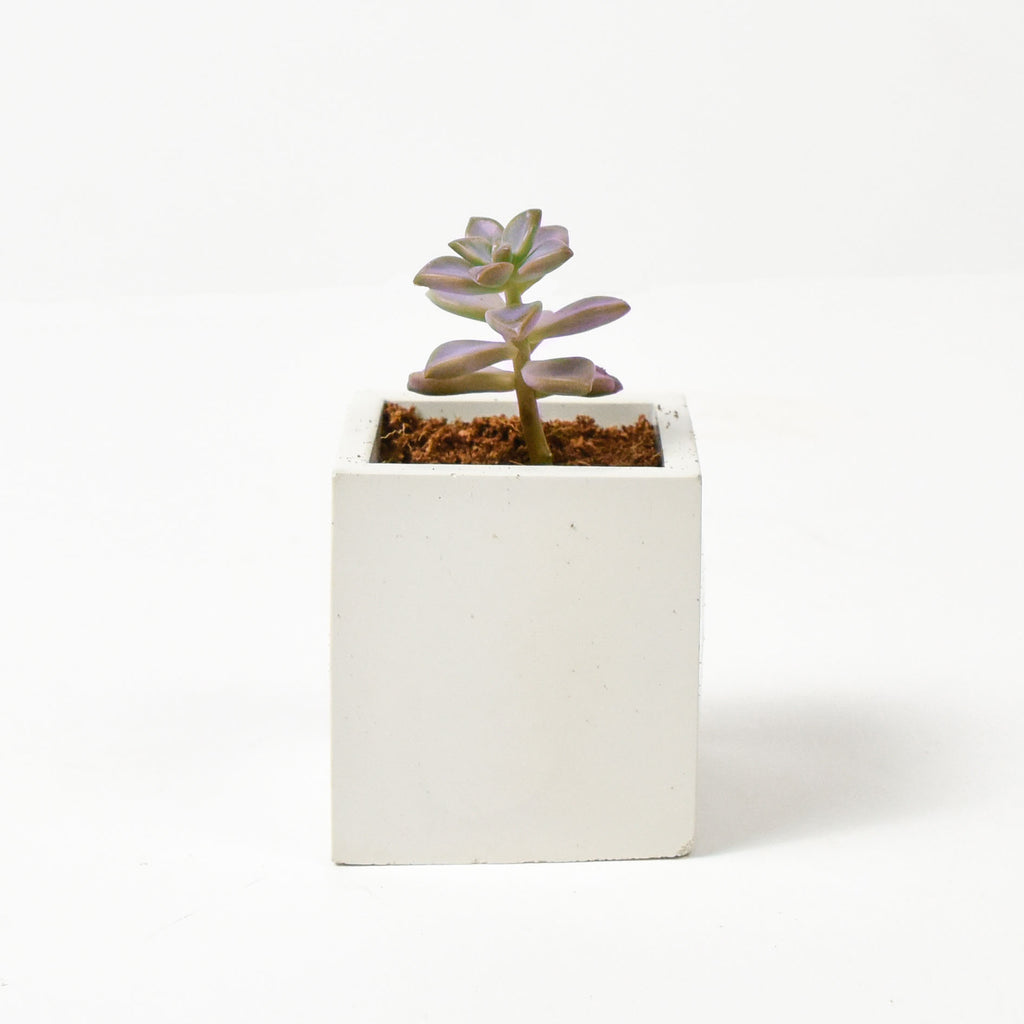CONCRETE POTS | WHITE CUBE (SMALL)