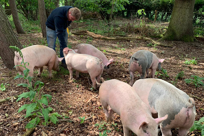 youngs farm produce pigs