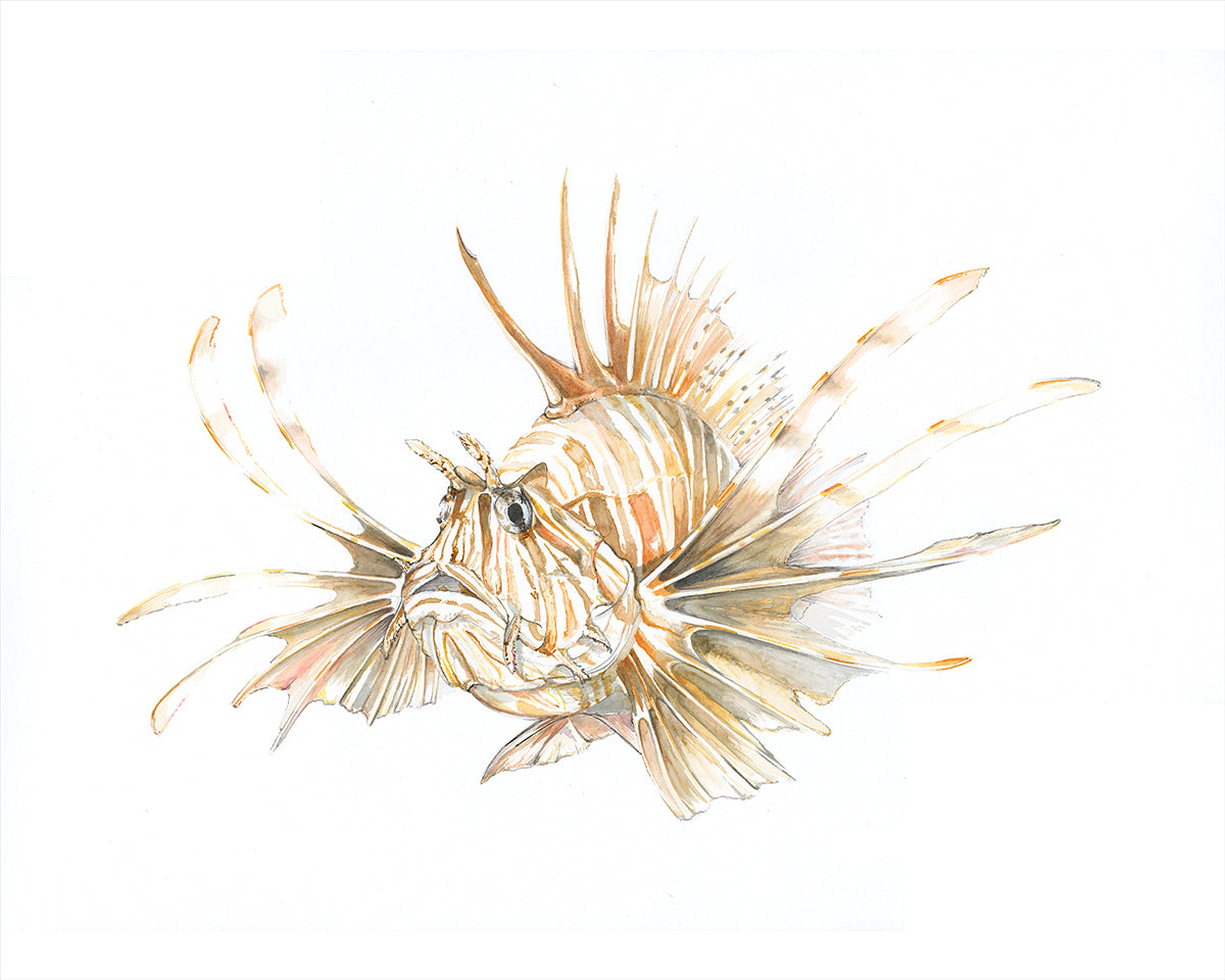 Lionfish Coffee Stain