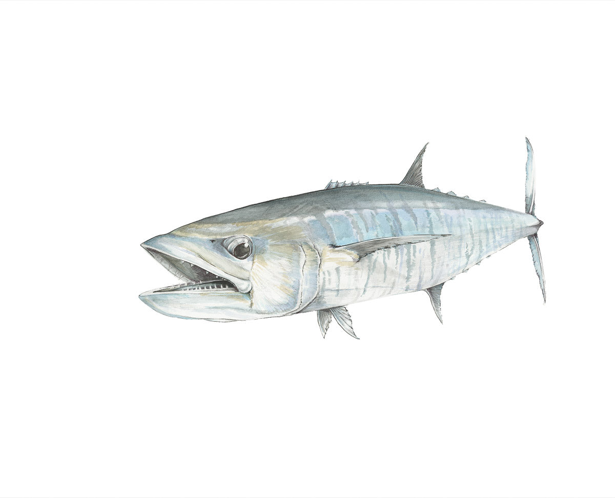 Razor Gang Kingfish