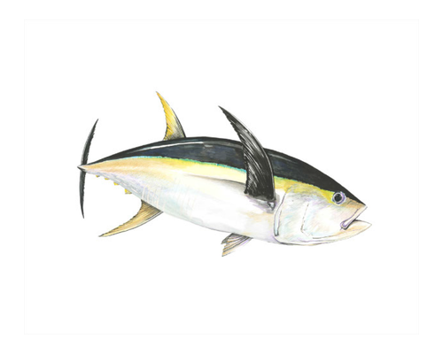 Yellowfin Broadside